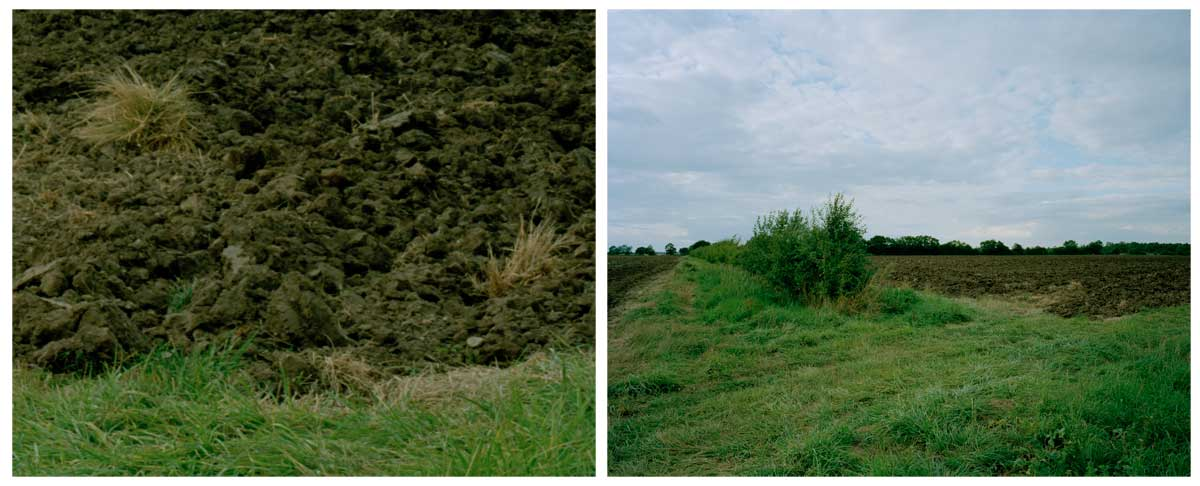 bosworth-diptych-02