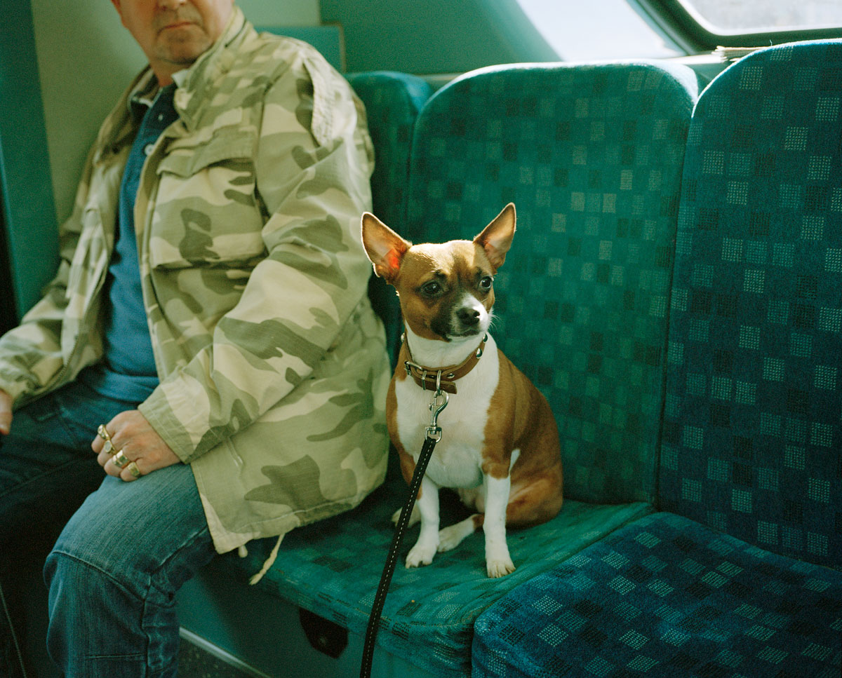 dog-on-bus