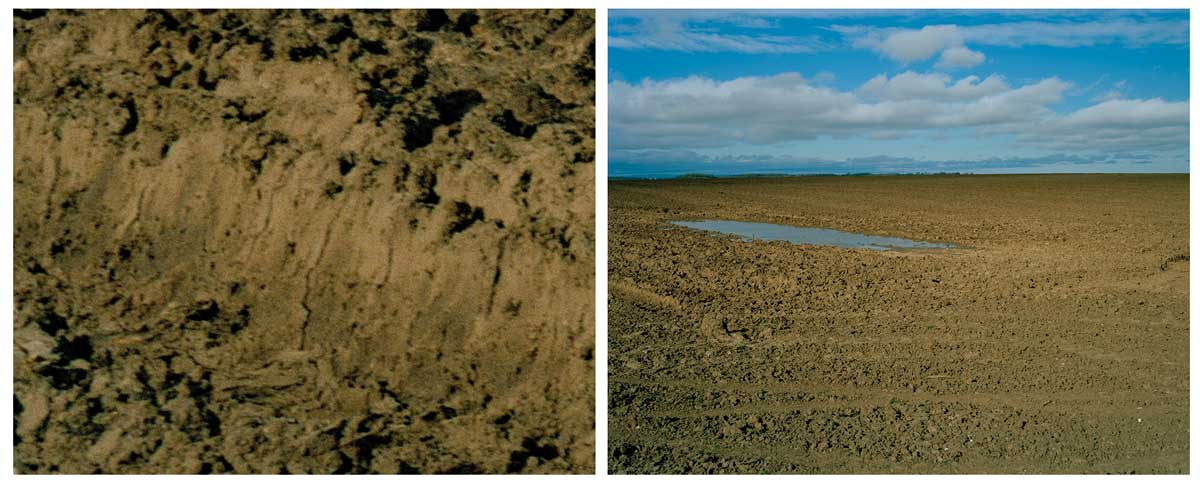 Towton Diptych 3