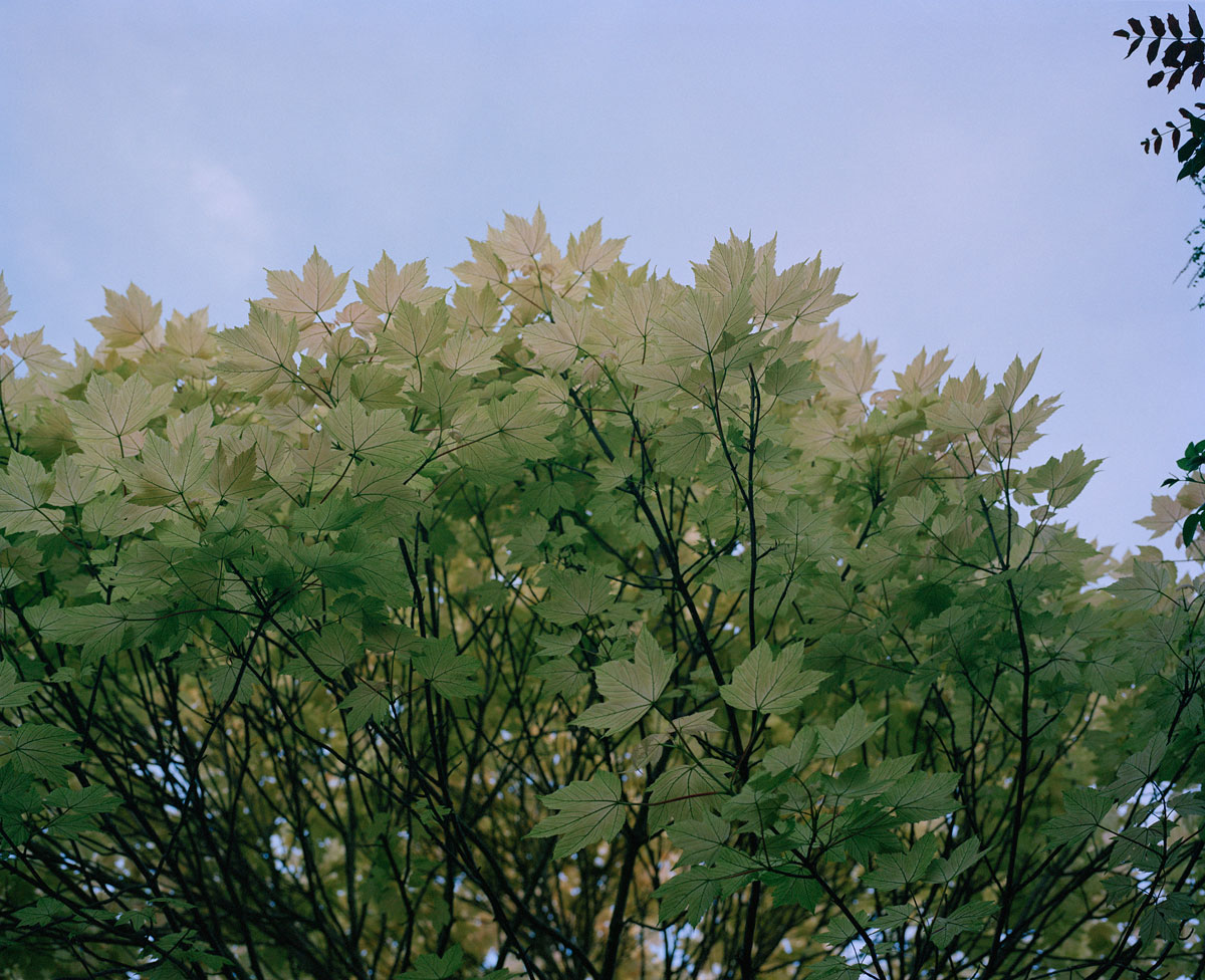 tree-leaves-and-sky
